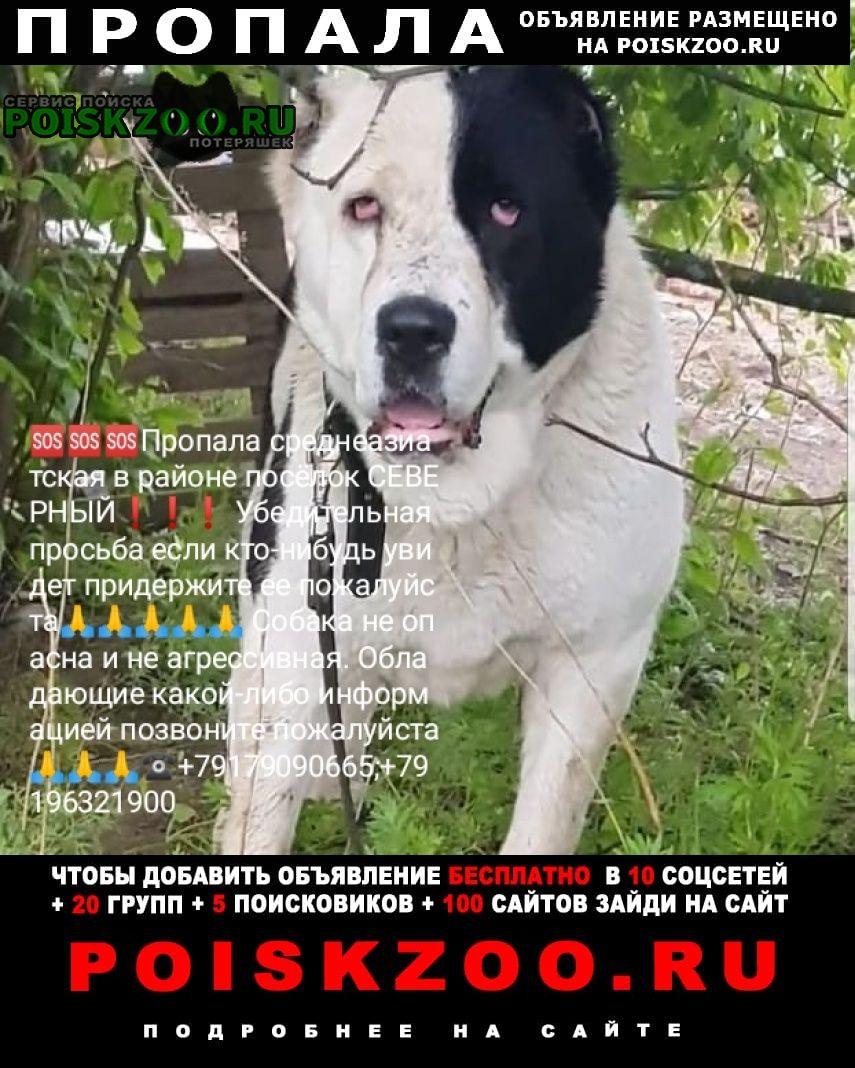 Казань Пропала собака помогите найти потеряшку