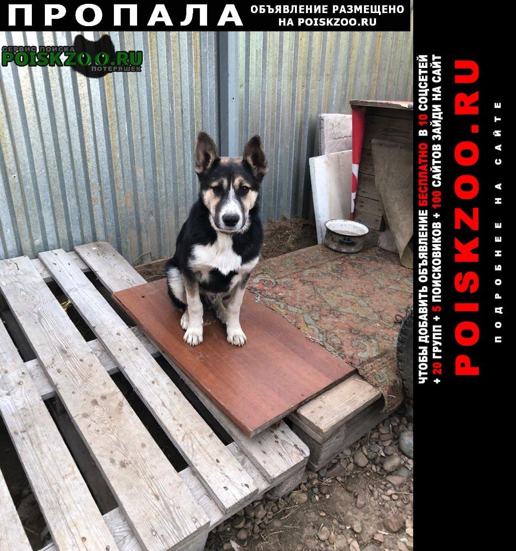 Пропала собака на собаке коричневый ошейник Иркутск