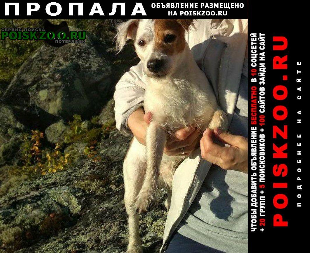 Североморск Пропала собака срочно помогите найти любимого пса