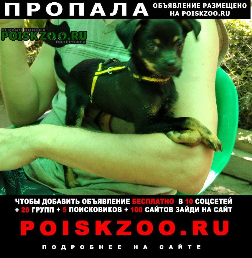 Пропала собака собачка 5 октября. Ростов-на-Дону