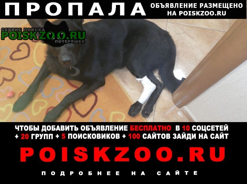 Зеленоград Пропала собака кобель, 1.5 года