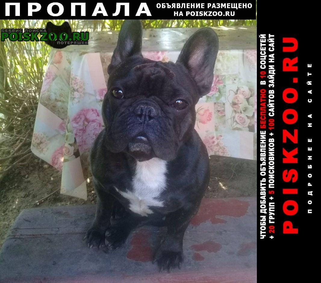 Пропала собака Дедовск