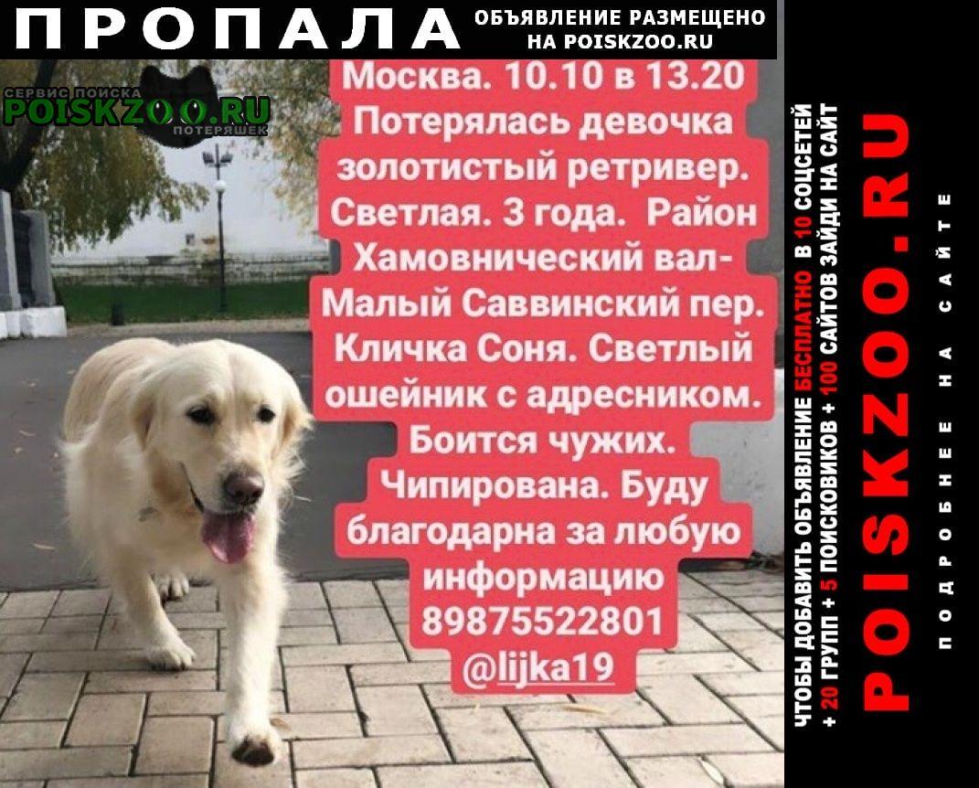 Пропала собака парк новодевичьи пруды Москва