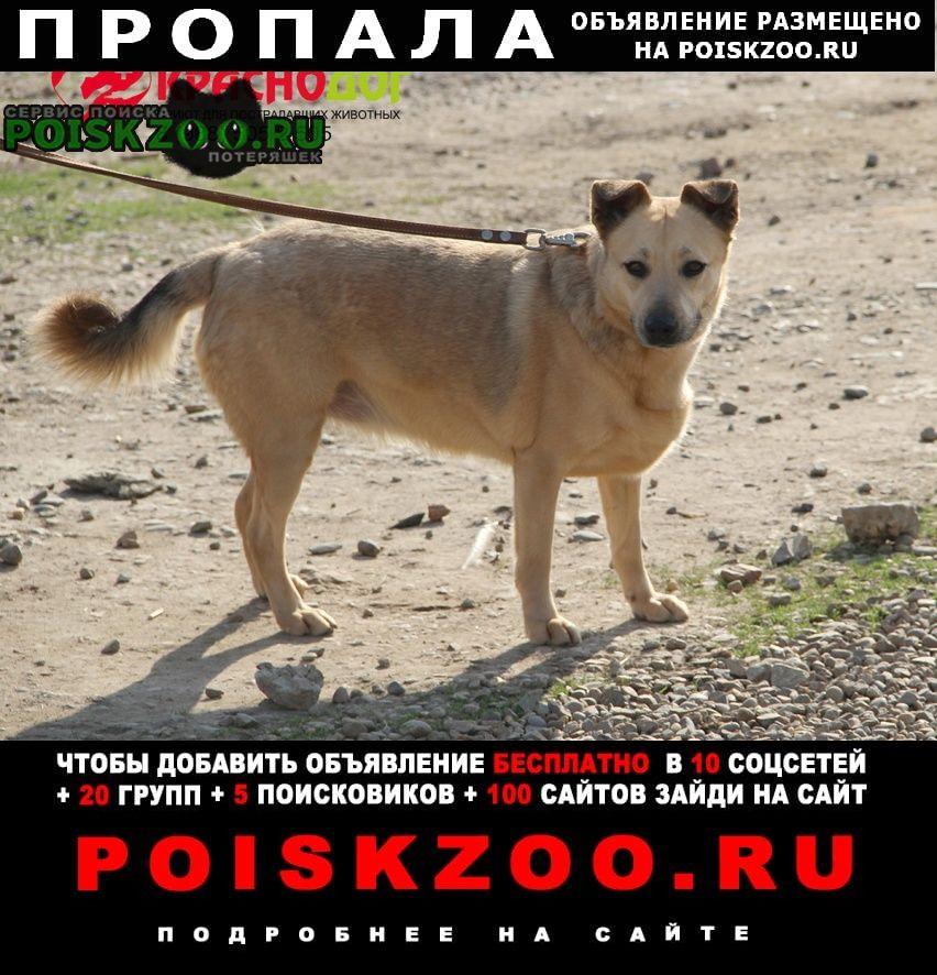 Пропала собака собачку зовут гретта.ей 3, 5 года Краснодар
