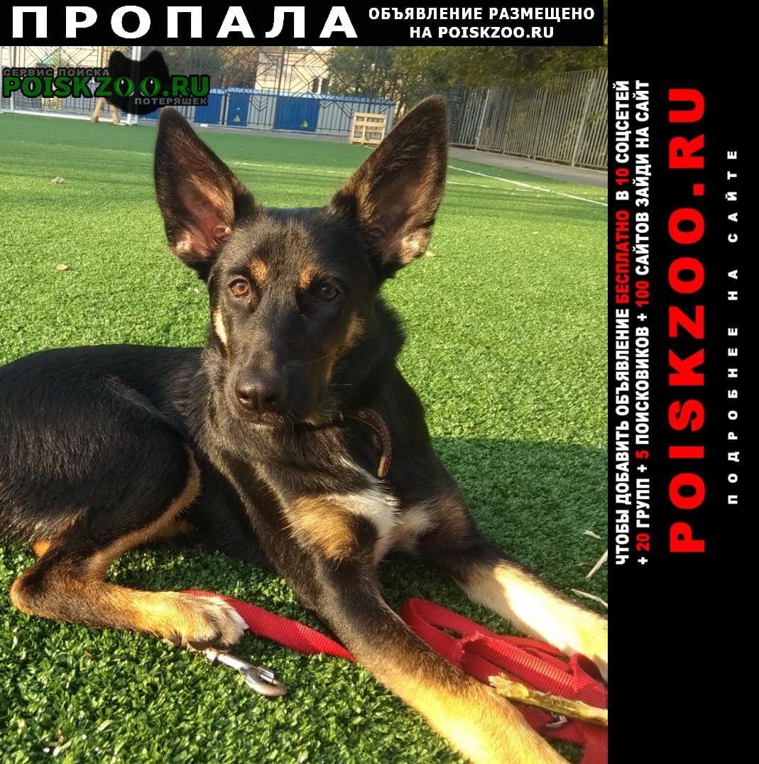 Пропала собака.. Хабаровск