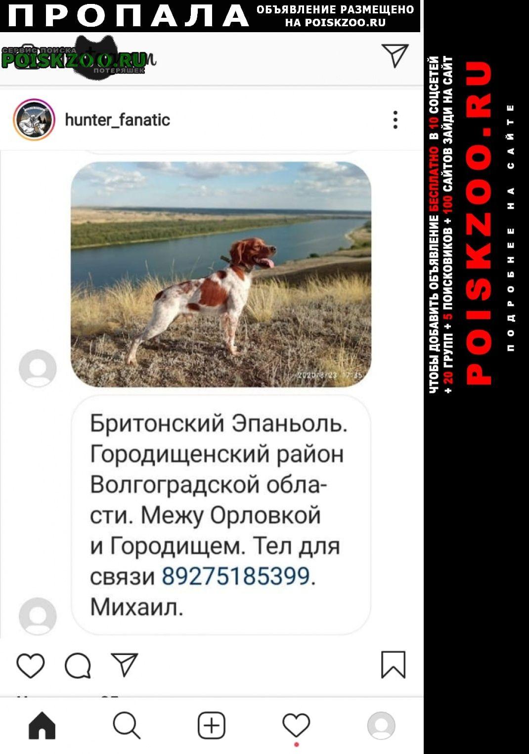 Пропала собака охотничий Волгоград