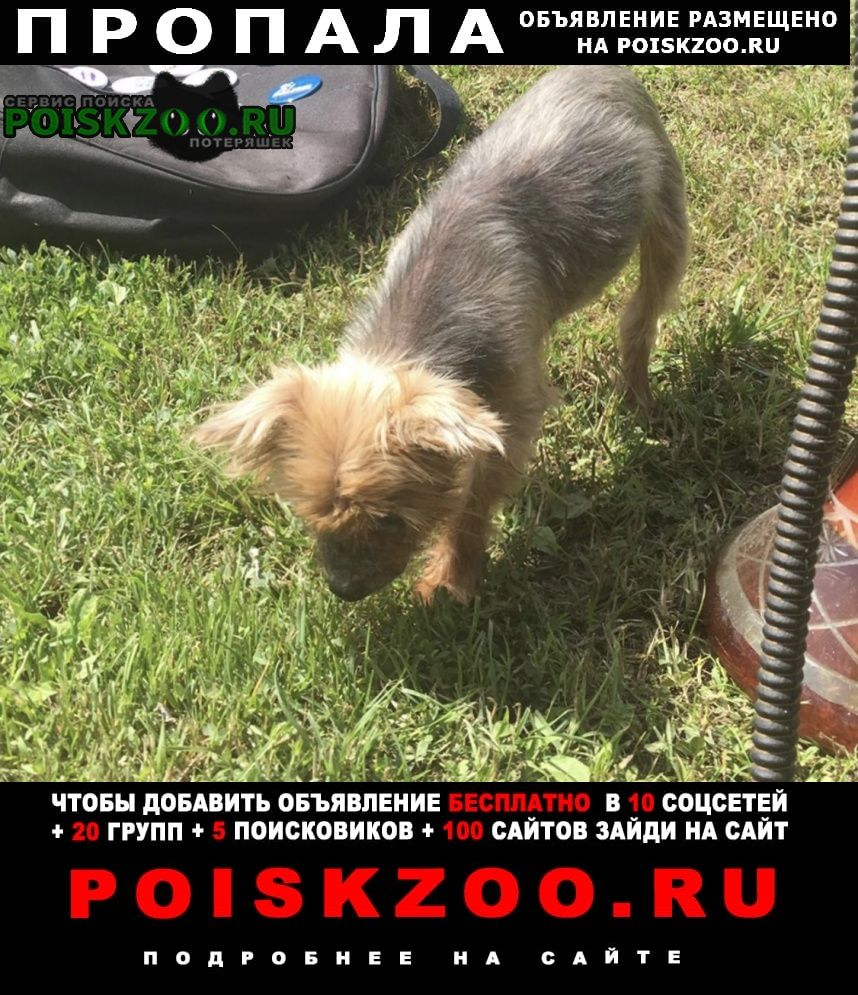 Пропала собака Павловский Посад