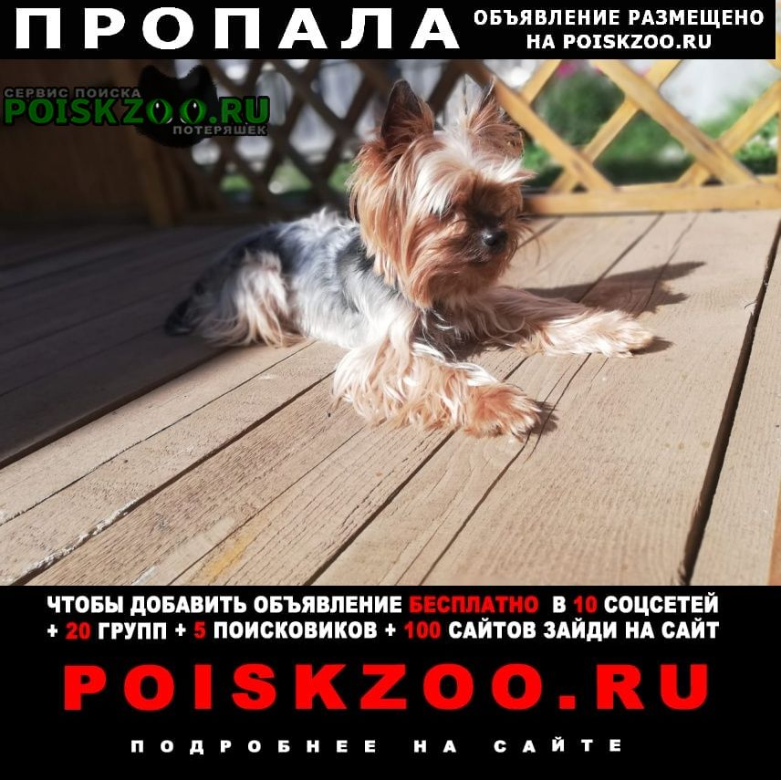Пропала собака Тверь