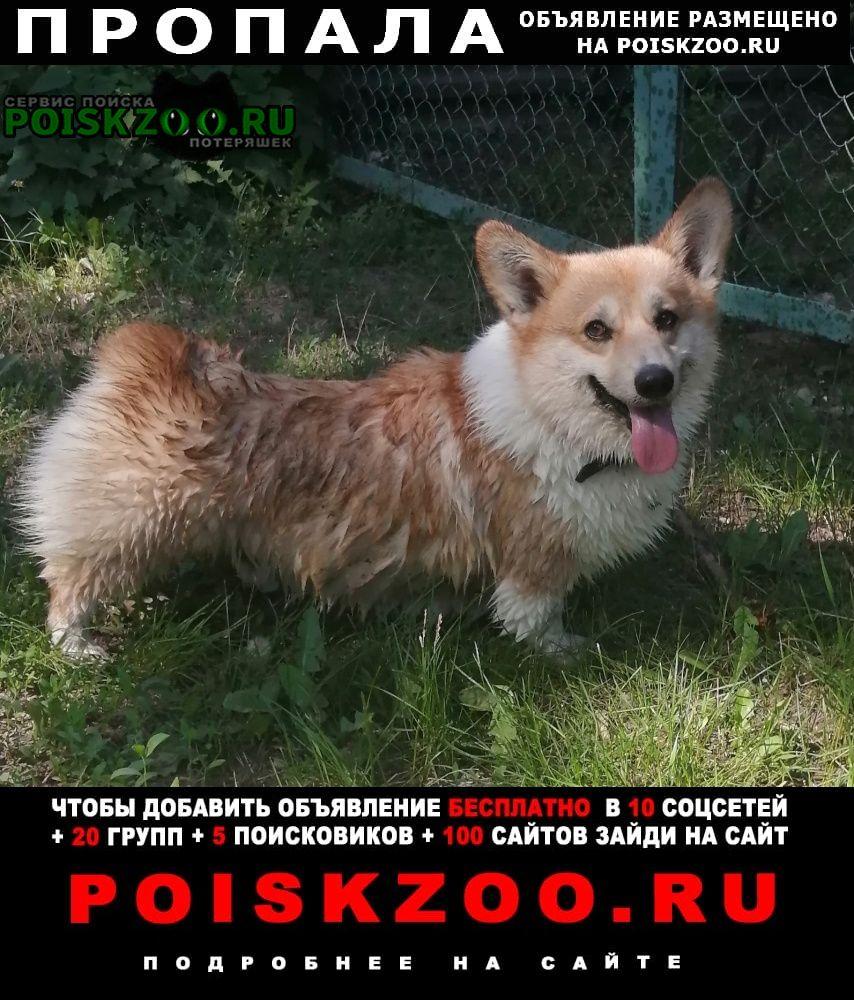 Пропала собака Ахтубинск