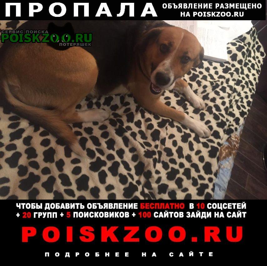 Пропала собака Кокошкино