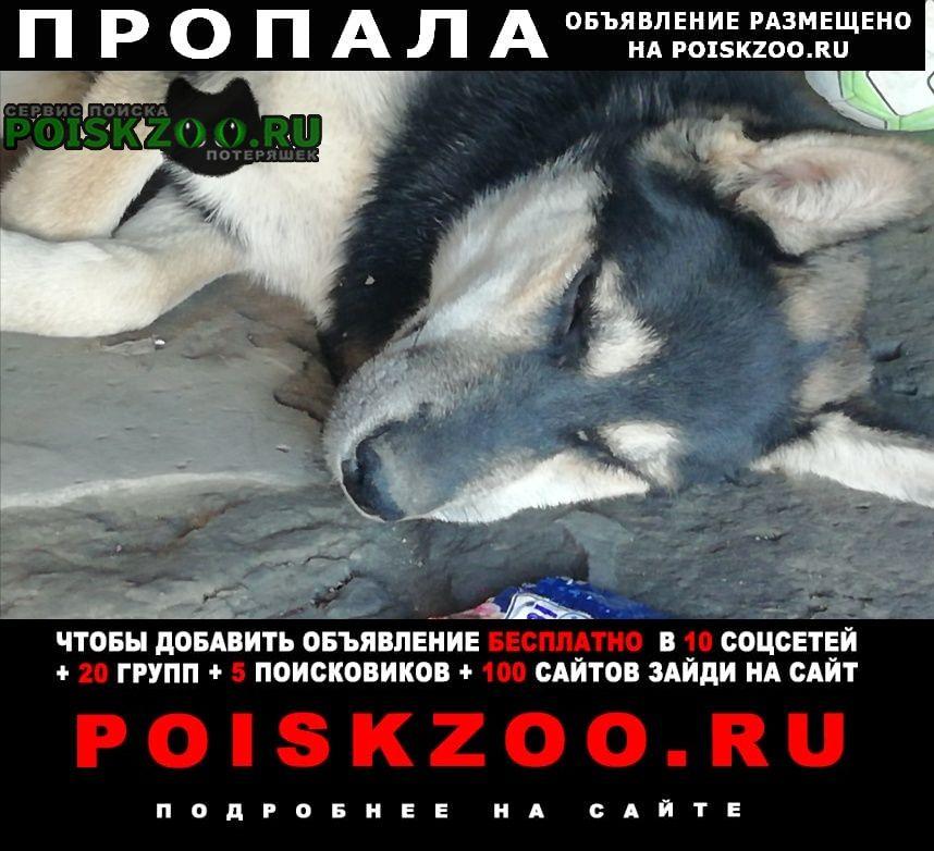 Пропала собака как 5 дней Анапа