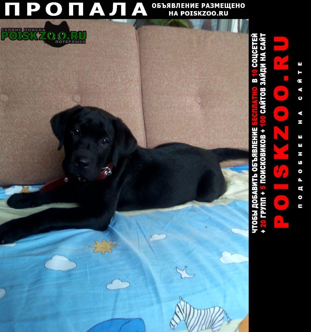 Пропала собака помогине найти собаку Феодосия