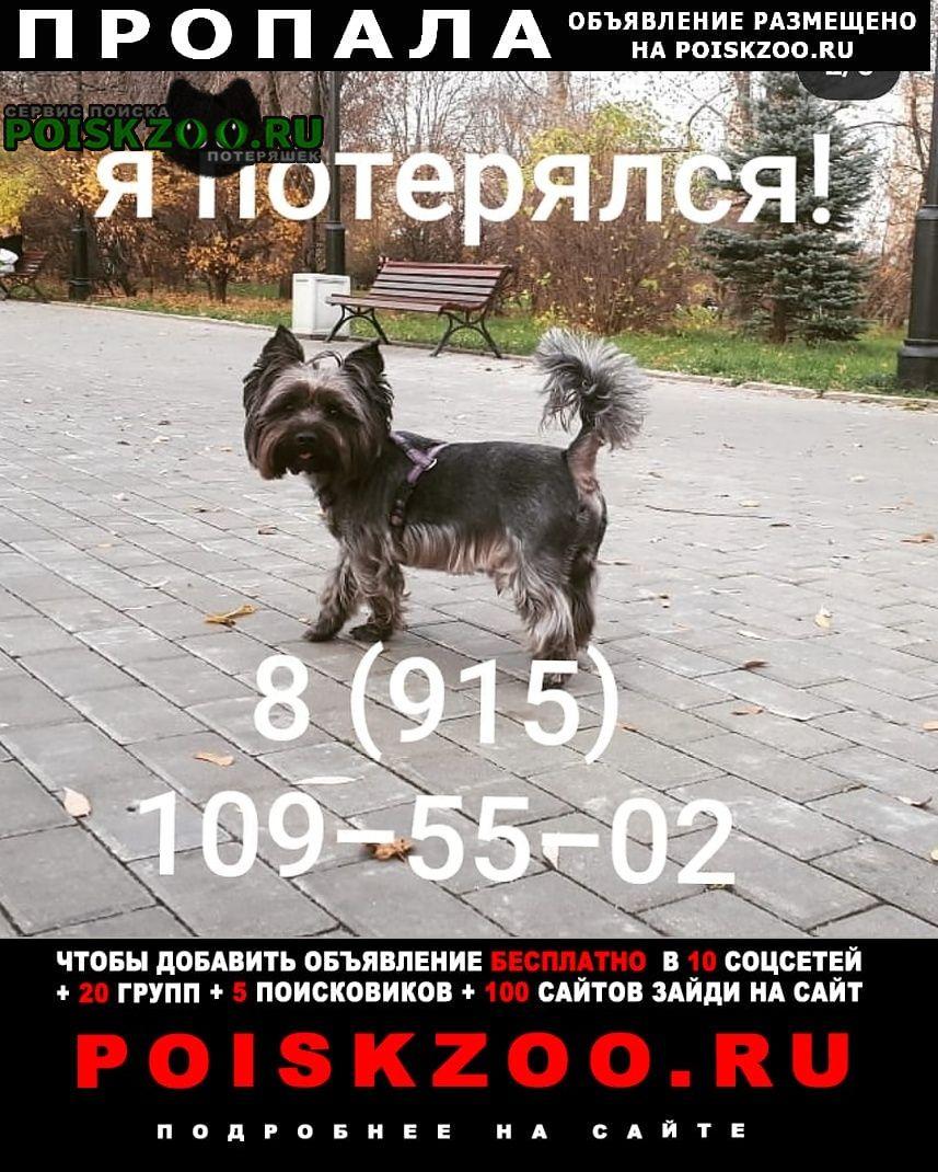 Пропала собака чёрный йорк Москва