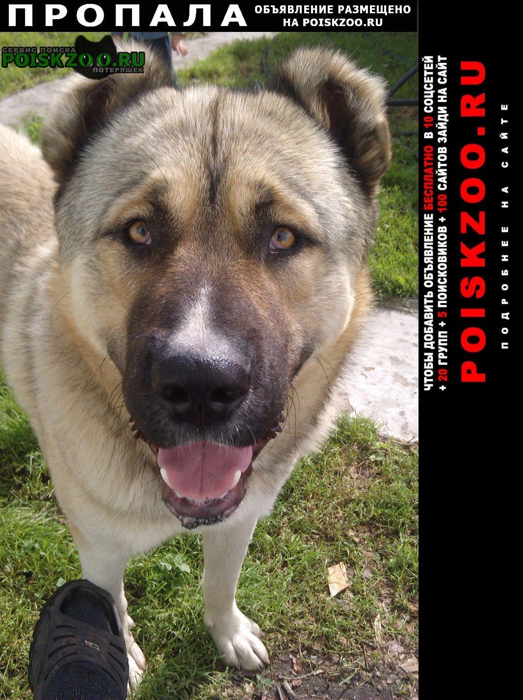 Белоярск Пропала собака