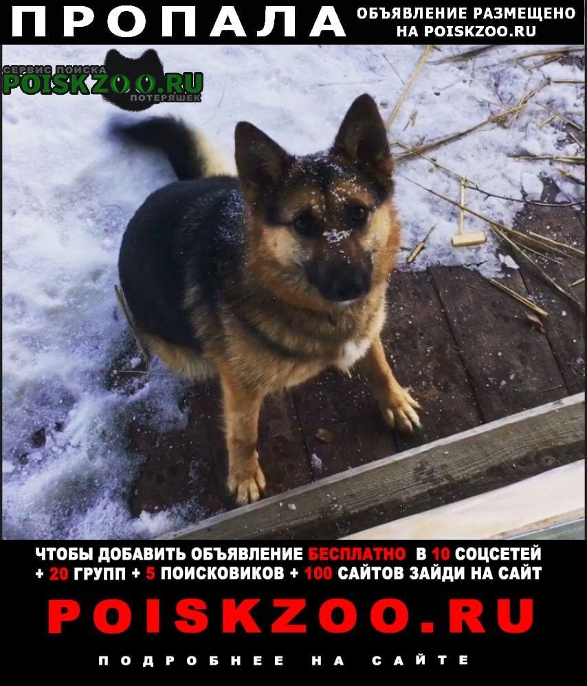 Пропала собака Зеленоград