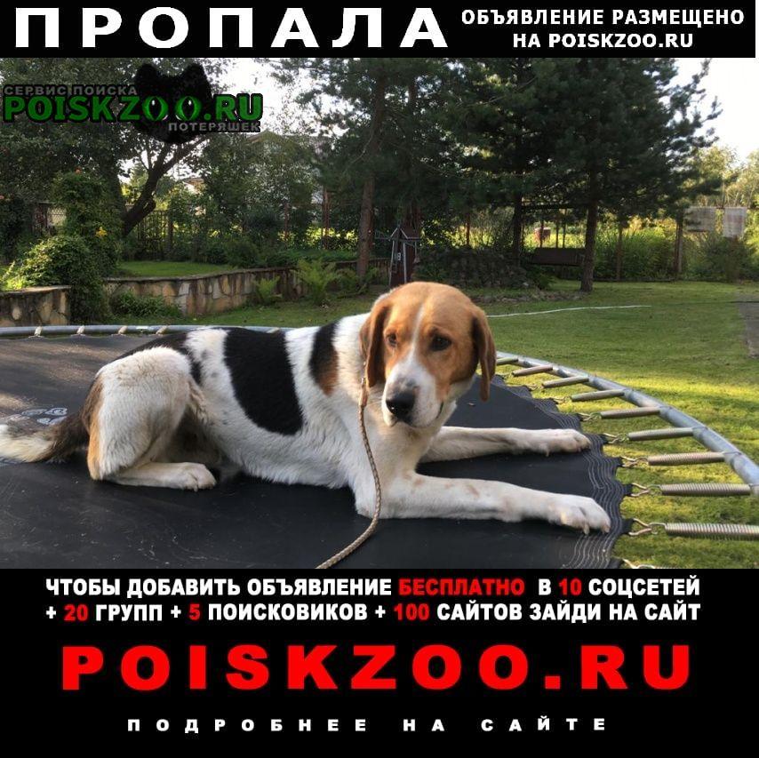 Пропала собака любимый друг Москва