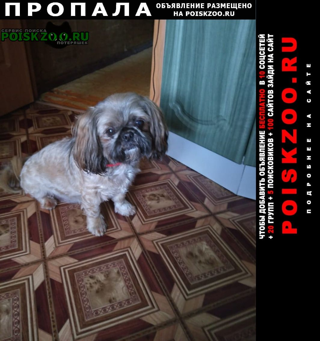 Пропала собака Балашиха