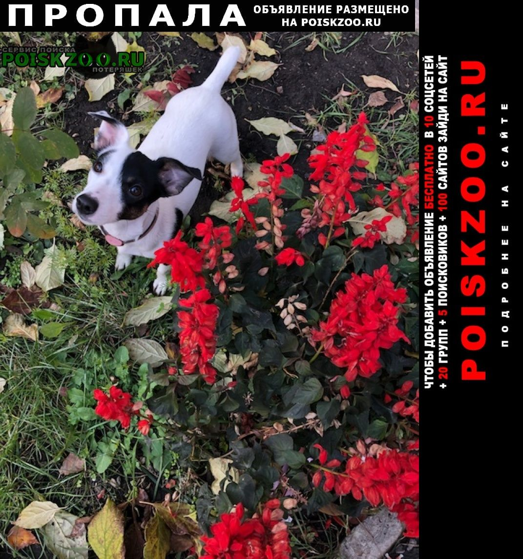 Пропала собака потерялась Барнаул