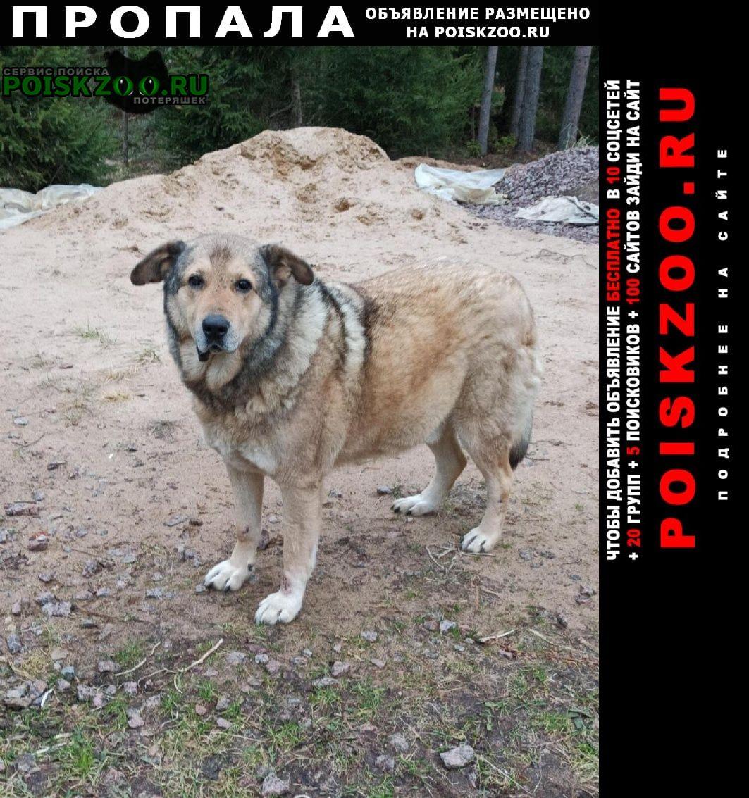 Пропала собака метис Санкт-Петербург