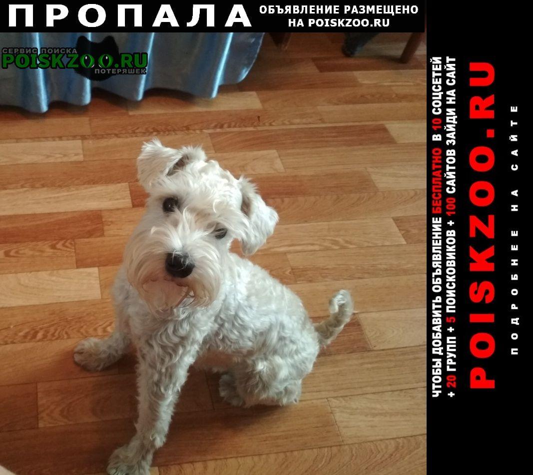Балаково Пропала собака
