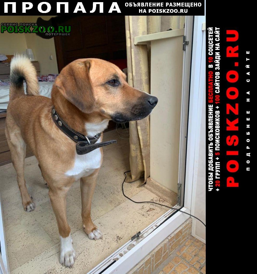 Дубна Пропала собака пес