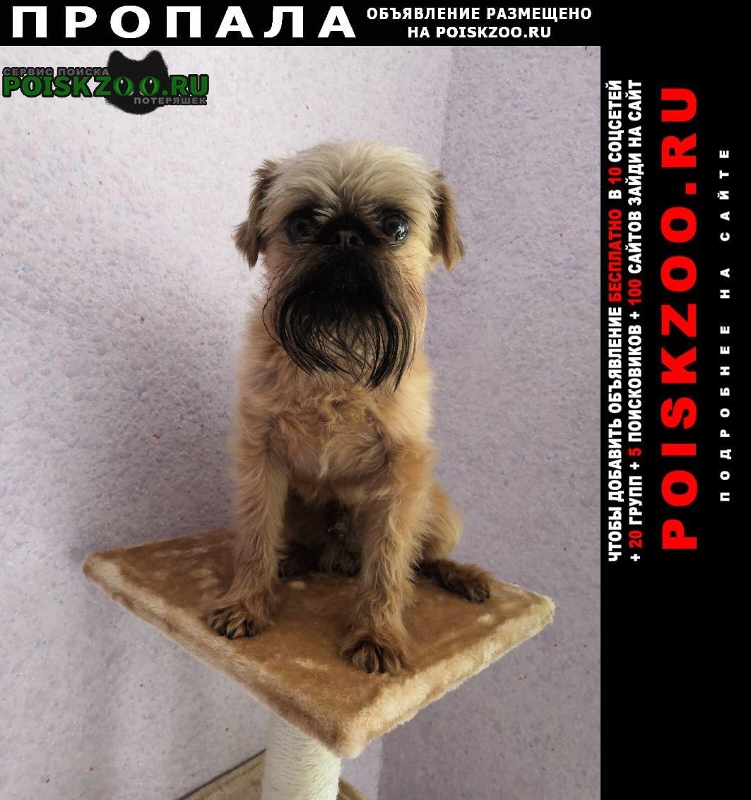 Пропала собака помогите пожалуйста найти  Шаховская