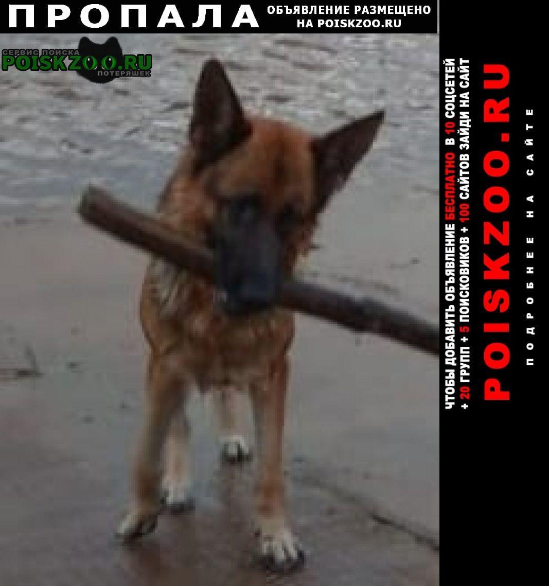 Нижневартовск Пропала собака