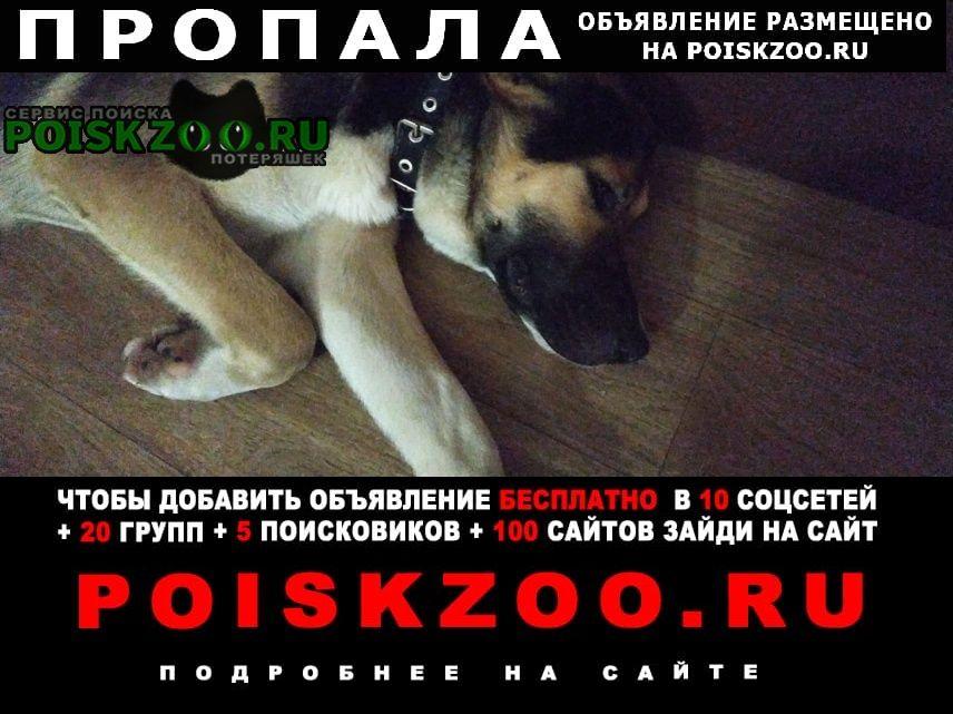 Пропала собака Березовский (Свердловская обл.)
