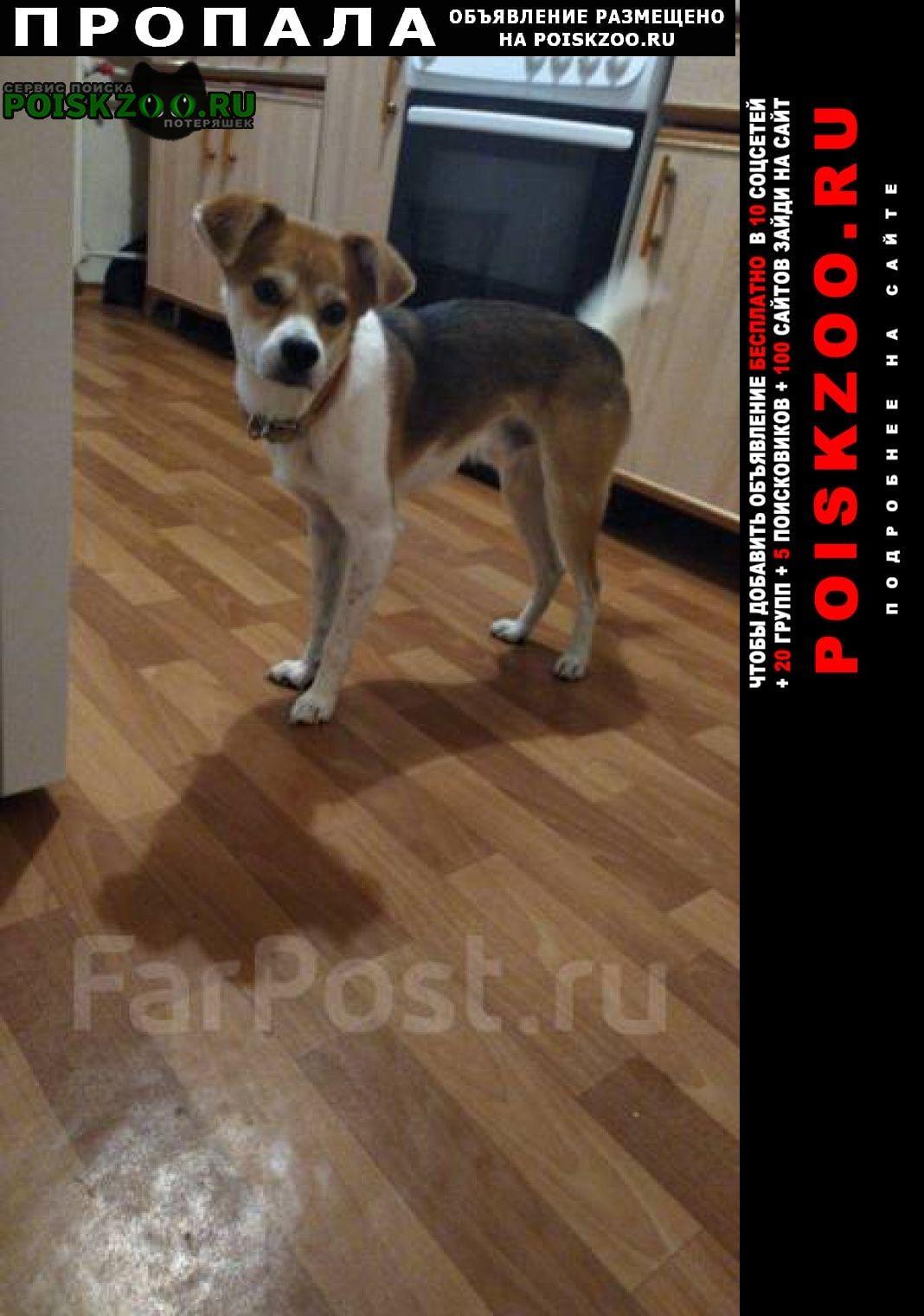 Славянка Пропала собака