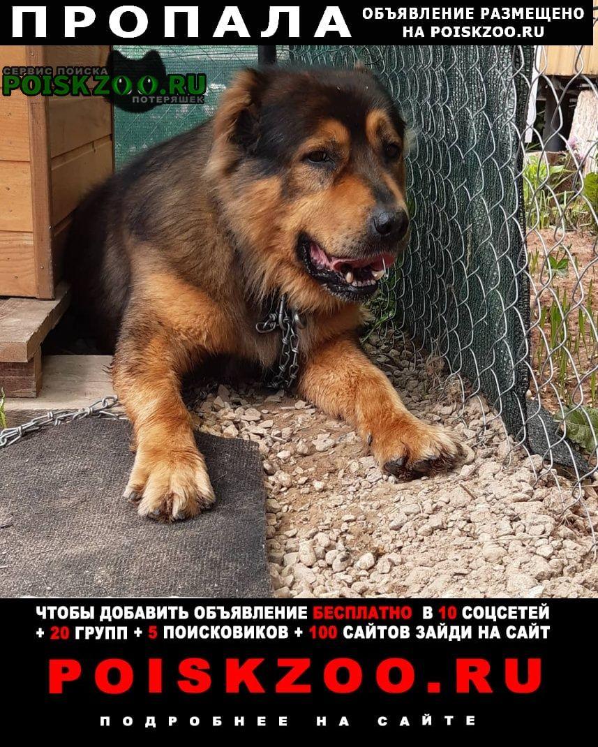 Пропала собака убежал с поводком кобель малыш Зеленоград