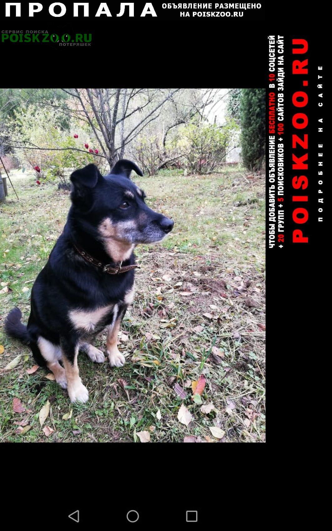 Пропала собака Михнево