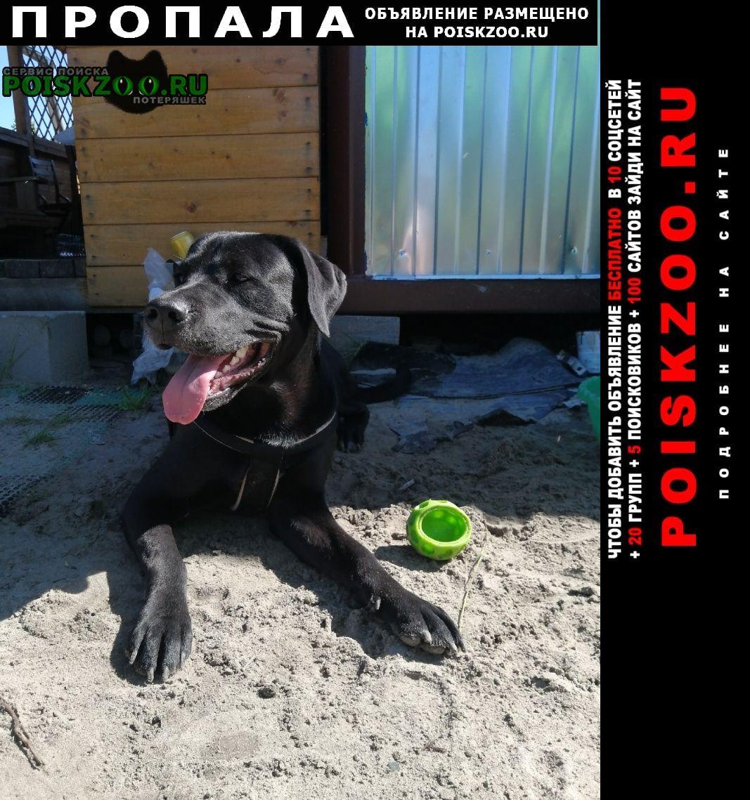 Пропала собака Электрогорск