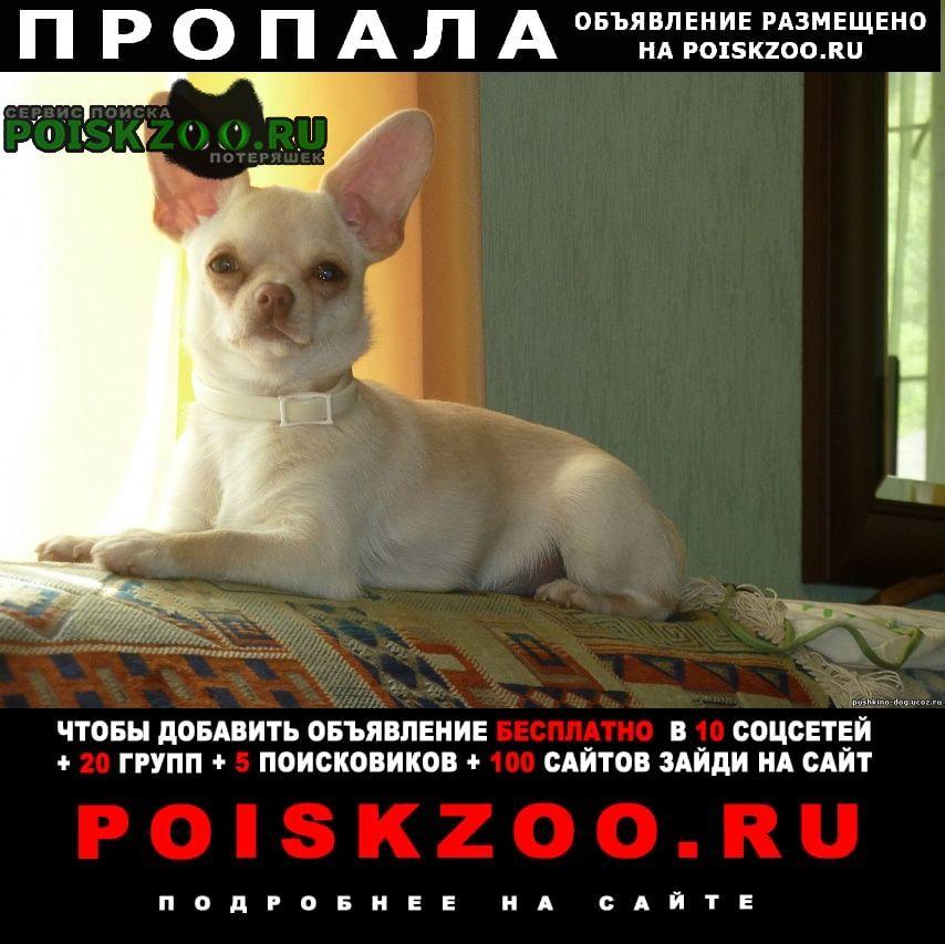 Пропала собака в Пушкино