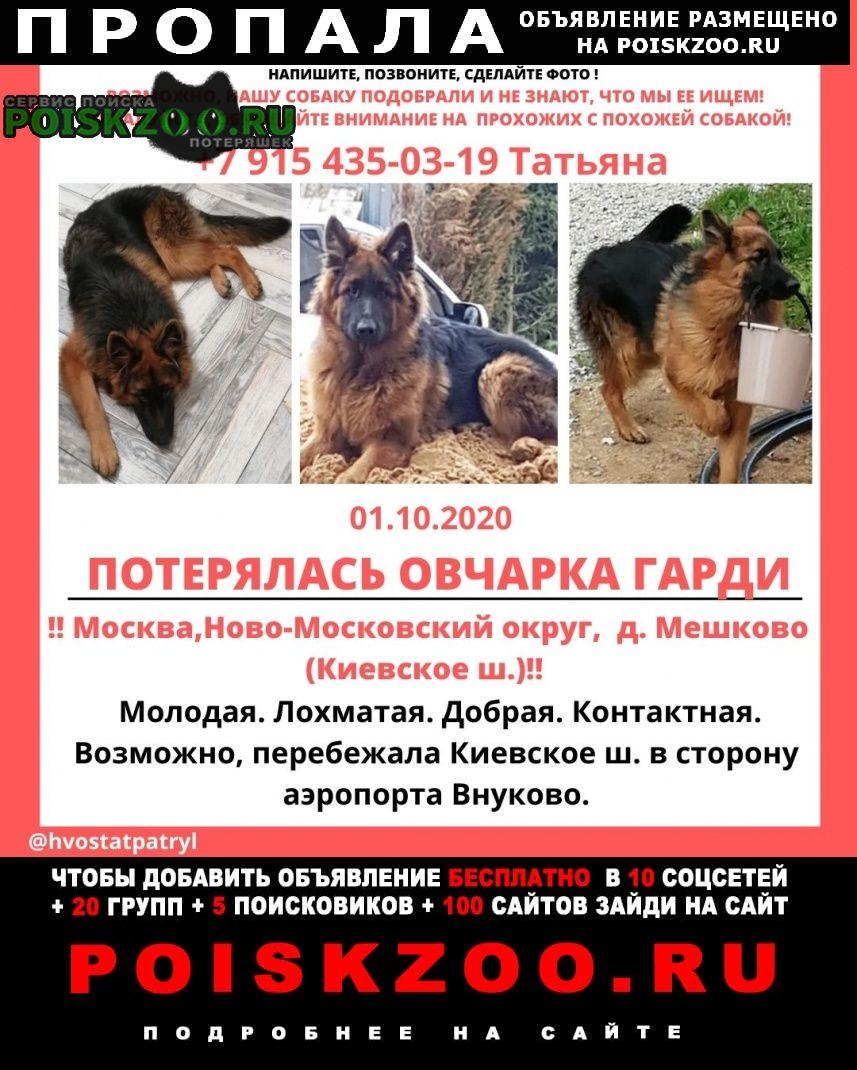 Пропала собака вознаграждение Москва