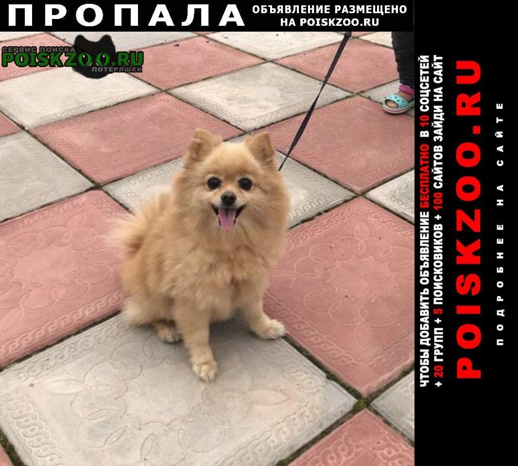 Пропала собака Воскресенск