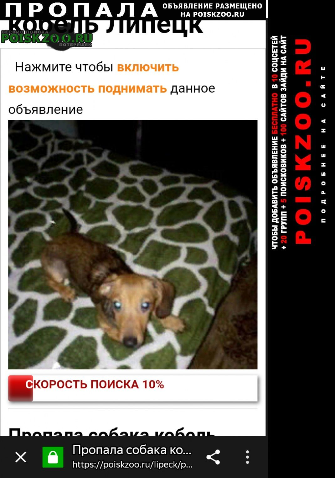 Пропала собака Липецк