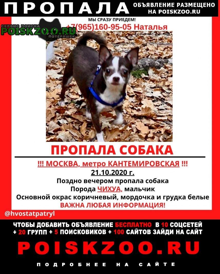 Пропала собака пёс чихуахуа жора Москва