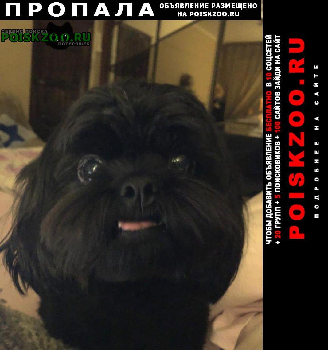 Пропала собака черный ши тцу Москва