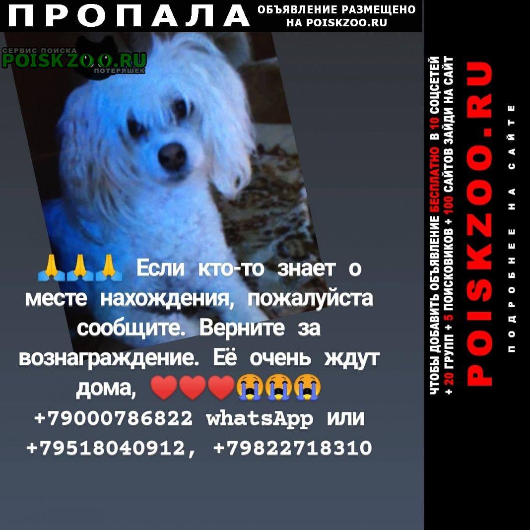 Пропала собака ищу собаку Челябинск