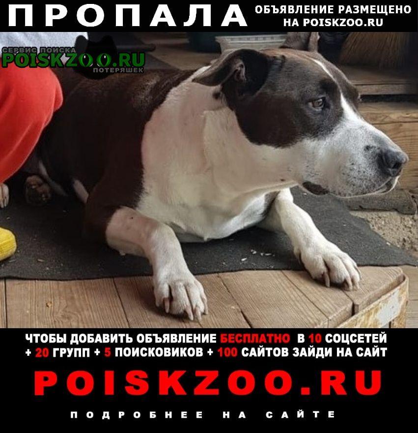 Пропала собака Голицыно (Московская обл.)