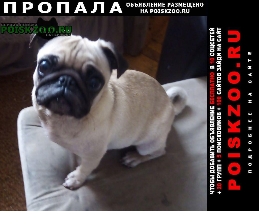 Пропала собака Новокузнецк