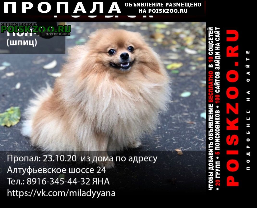 Пропала собака рыжий шпиц, 4 года Москва