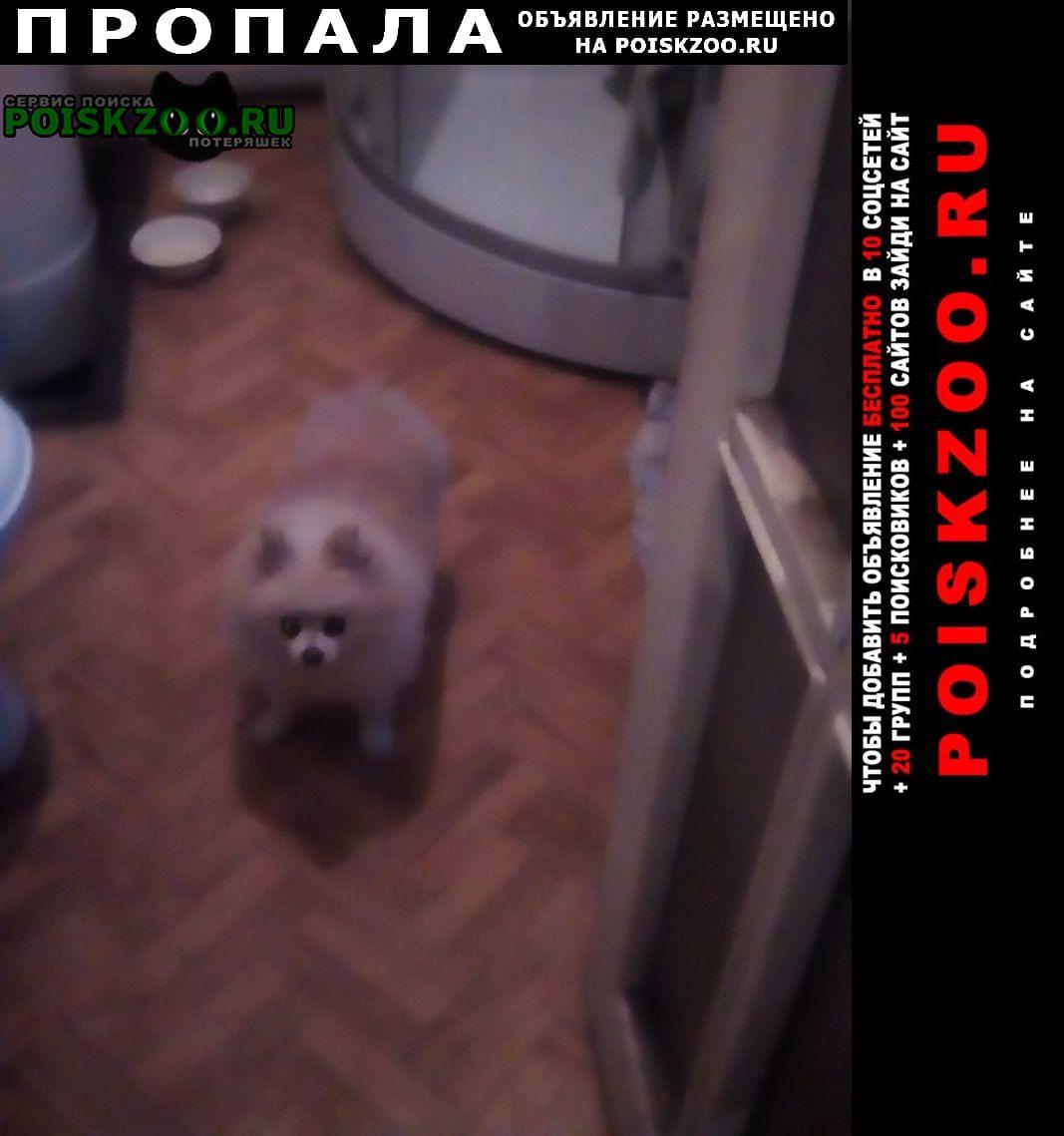 Пропала собака похищена . Рязань