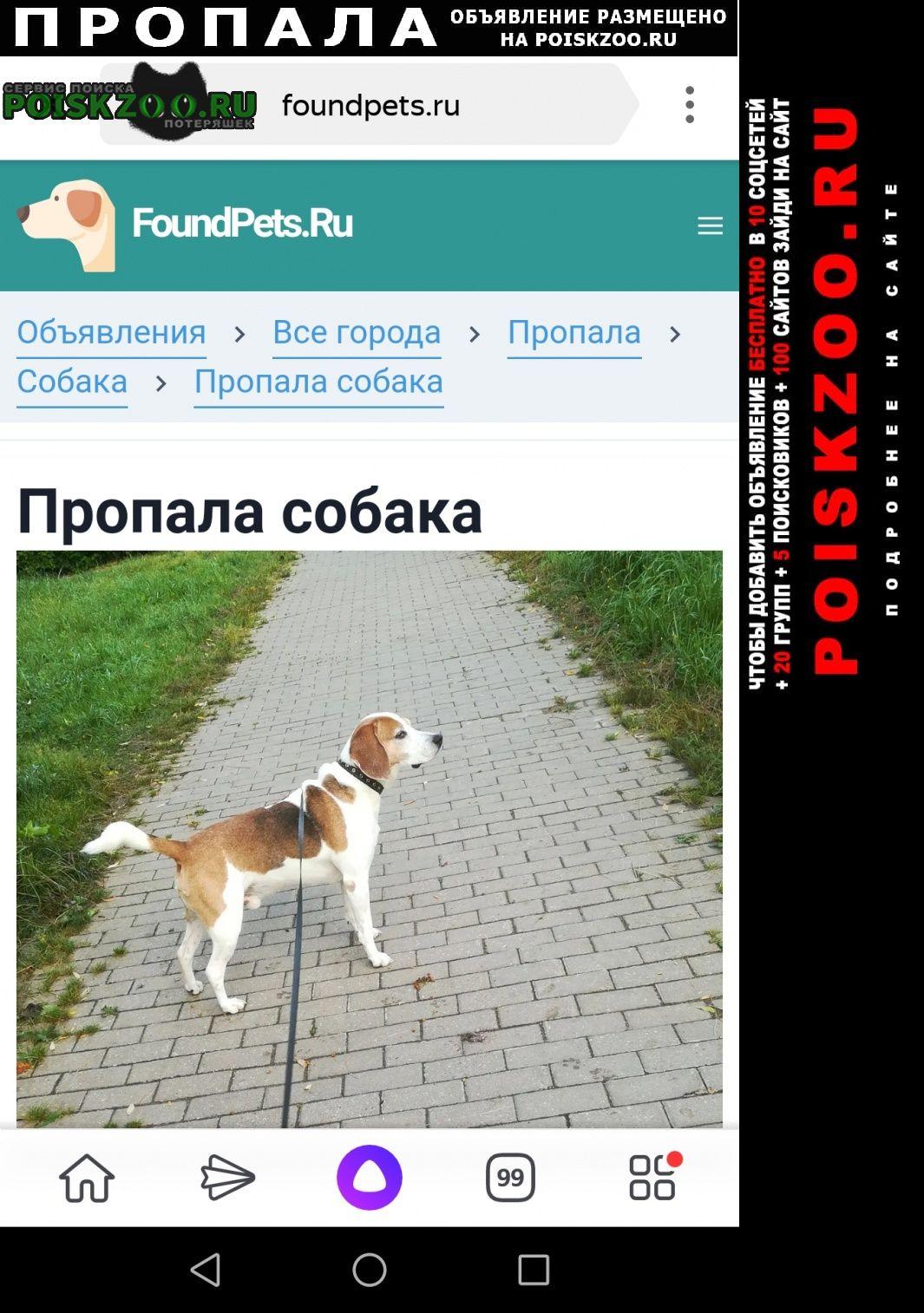 Пропала собака Серпухов