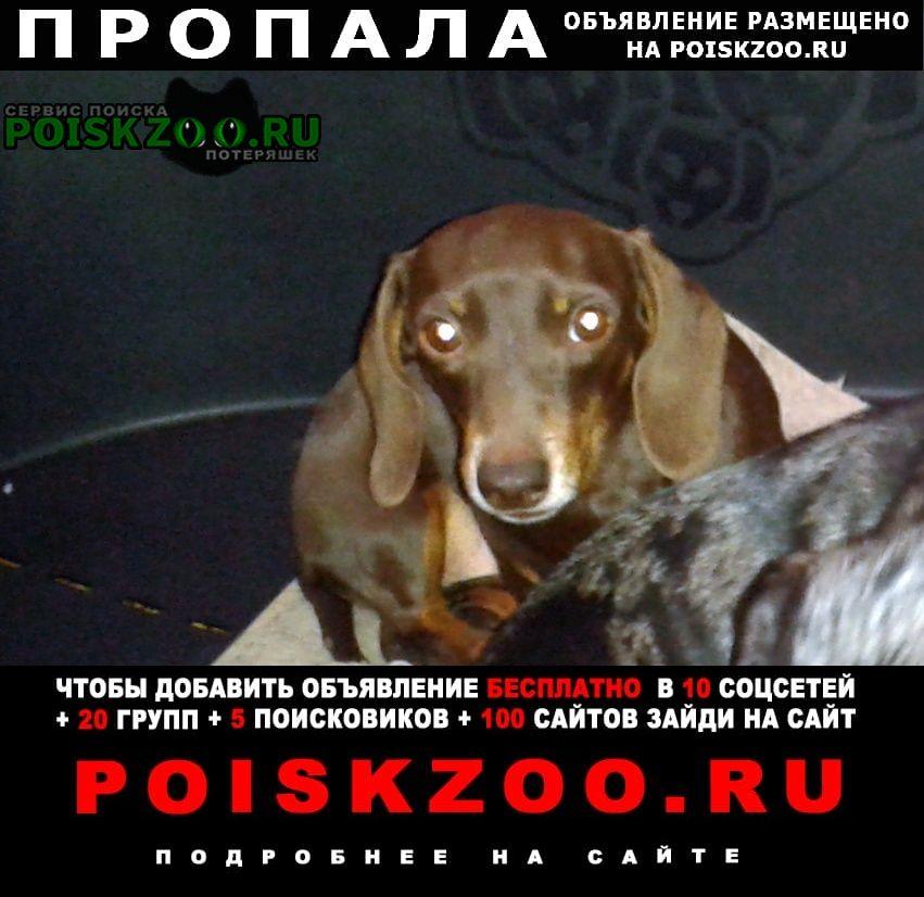 Пропала собака такса гладкошерстная кроличья Москва