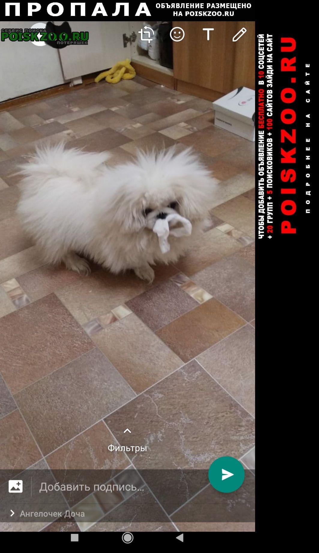 Пропала собака Домодедово