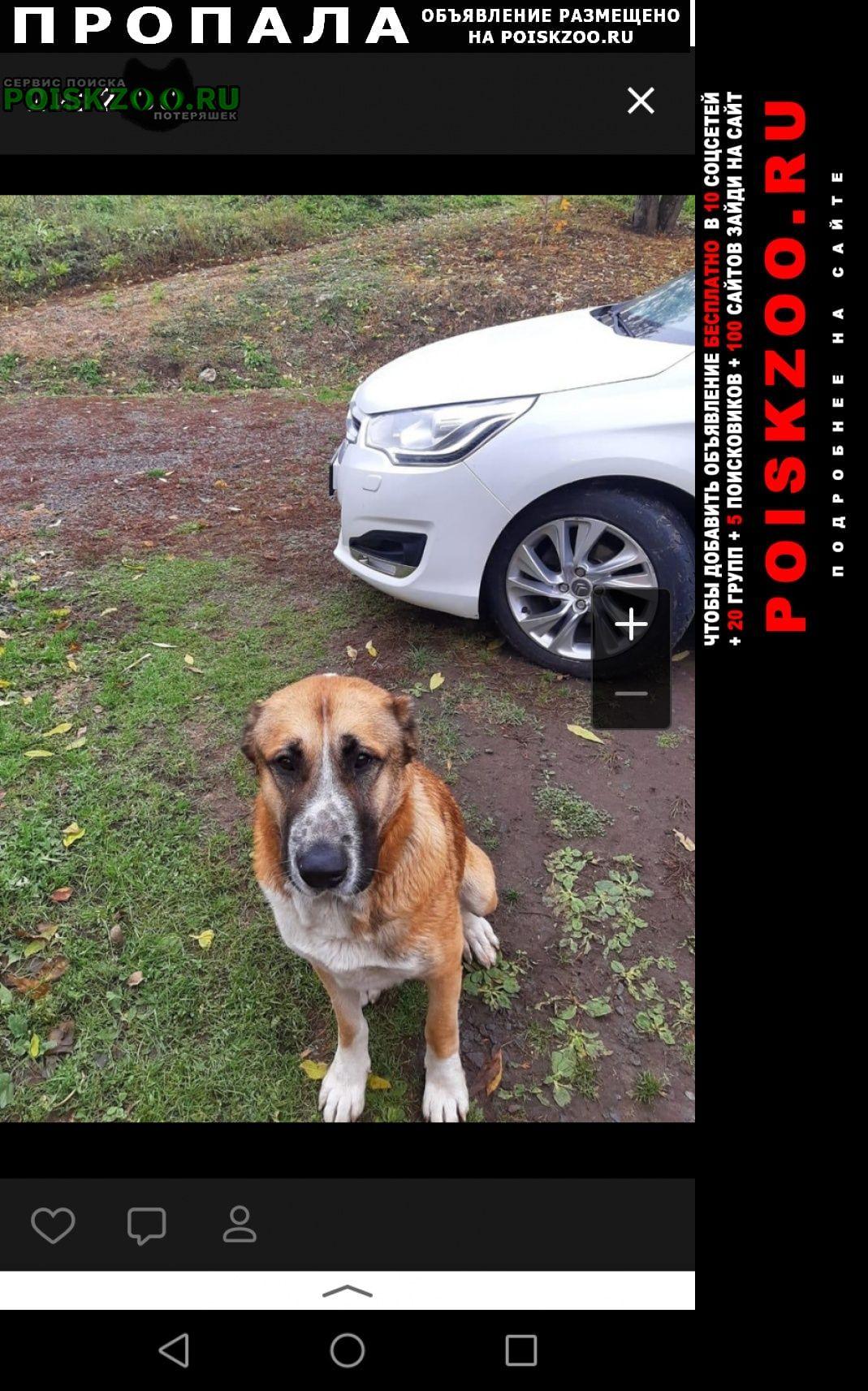 Пропала собака кобель верните собаку Железногорск Курская обл.