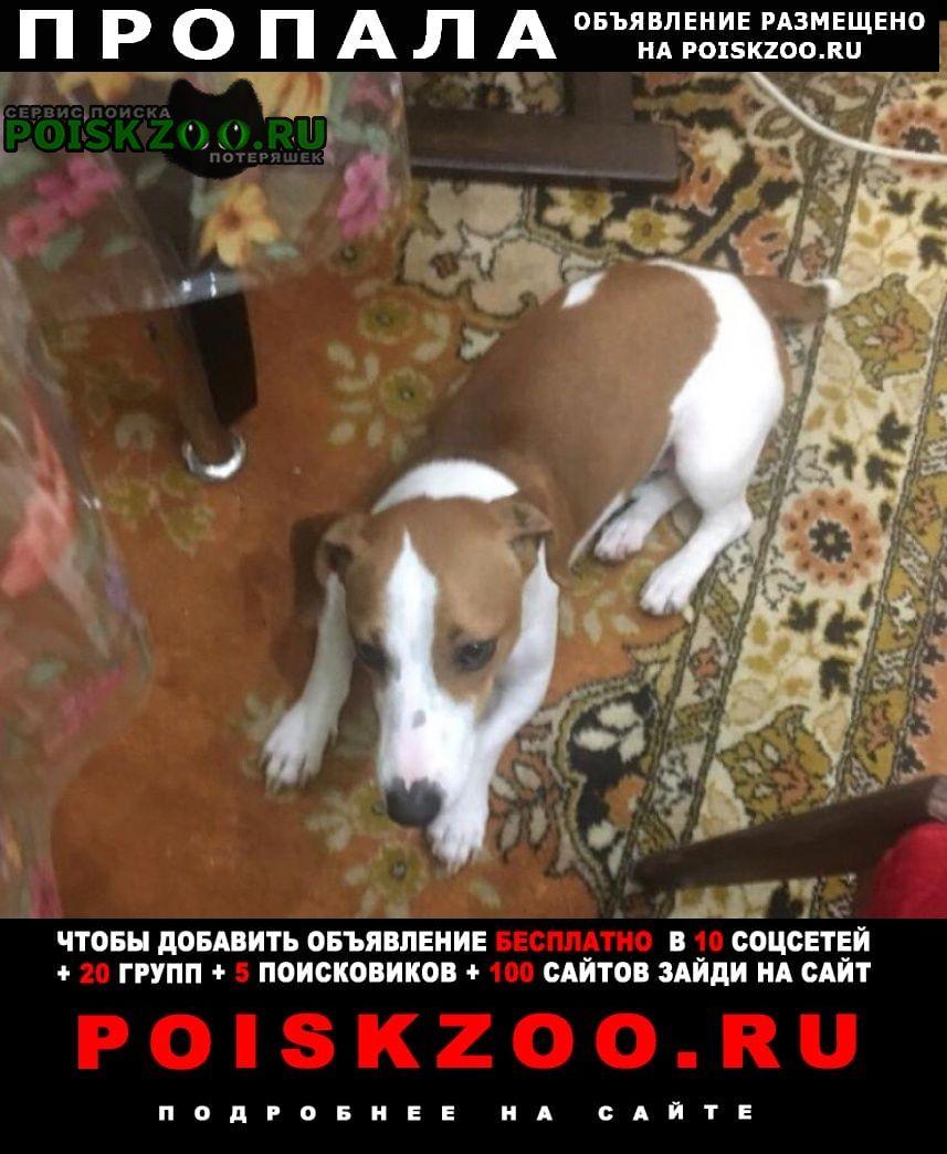 Пропала собака Севастополь