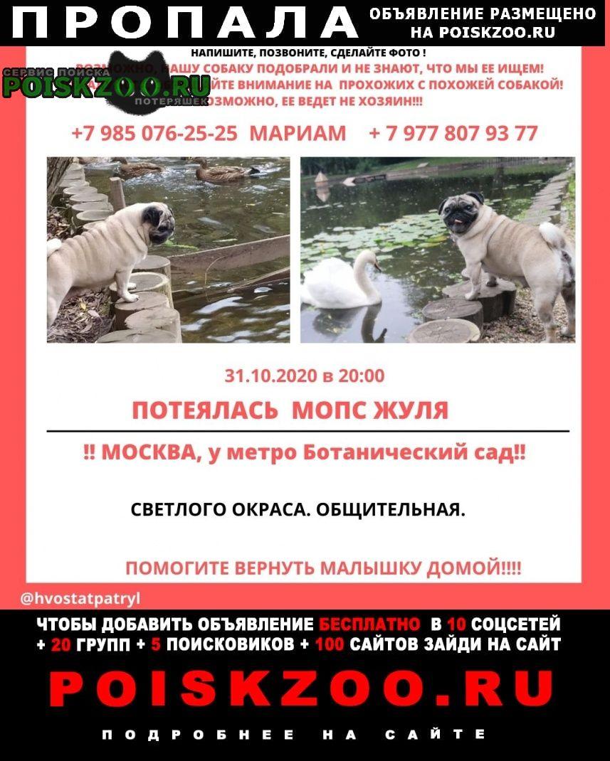 Пропала собака жуля у метро ботанический сад Москва