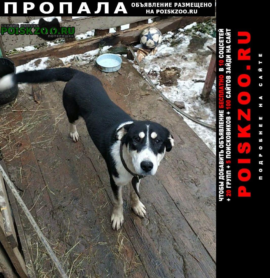 Пропала собака 1 ноября 2020 Березовский (Свердловская обл.)